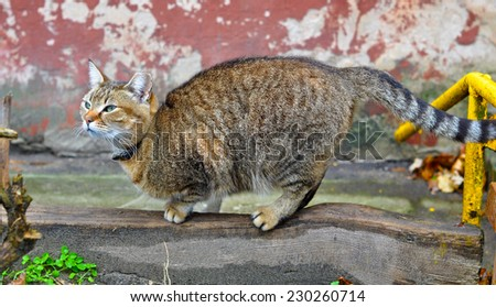 cat sharpening its claws - stock photo