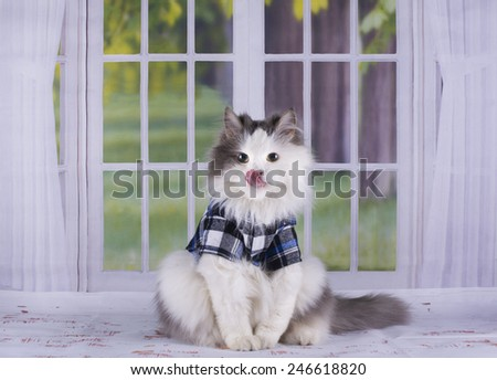 cat shirt against the window - stock photo