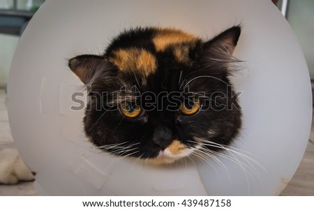 cat sick with collar looking  - stock photo