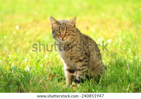 Cat siting in green grass