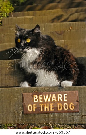 "Cat sits over ""Beware of the Dog"" sign - stock photo"