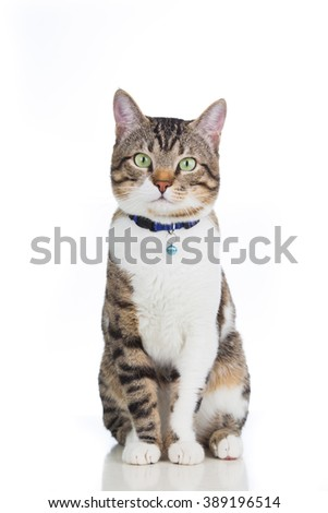Cat  sitting and looking to camera isolated on white background. - stock photo