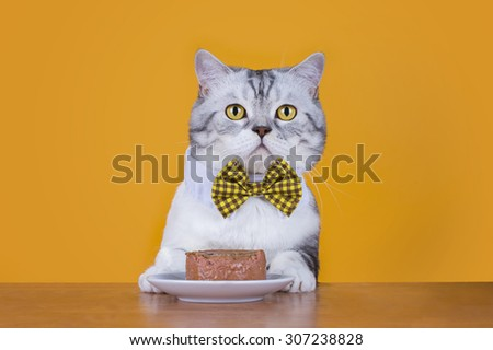 cat sitting at a table in a restaurant on a yellow isolated background - stock photo
