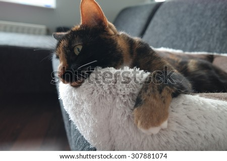 Cat sitting in a soft bed, with paw hanging over.