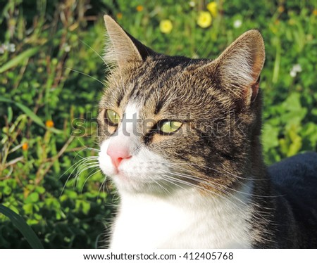 Cat sitting in a spring meadow - stock photo