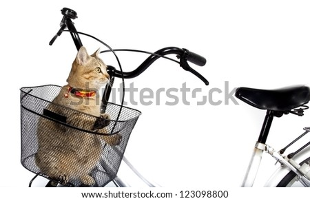 cat sitting in bicycle basket - stock photo