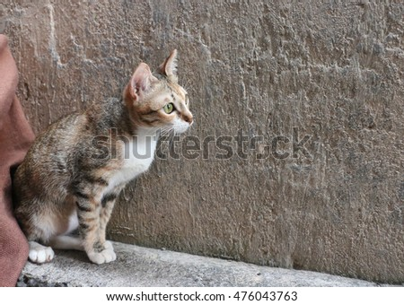 Cat sitting in front of a wall.