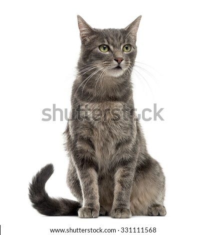 Cat sitting in front of a white background - stock photo