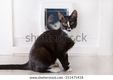 Cat sitting in front of the cat doors and other cat looking through it - stock photo