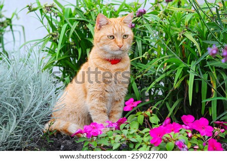 Cat sitting in the flowers - stock photo