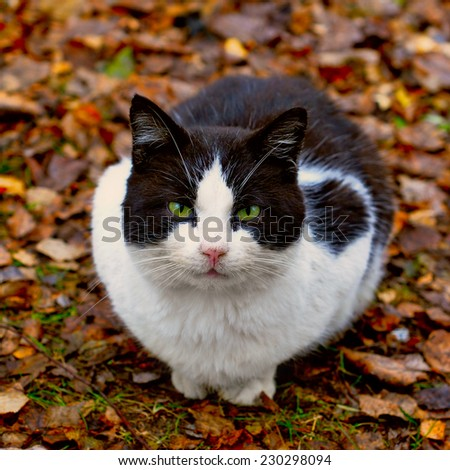 cat sitting in the leaves  - stock photo