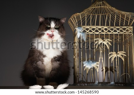 Cat sitting next to empty birdcage against gray background - stock photo