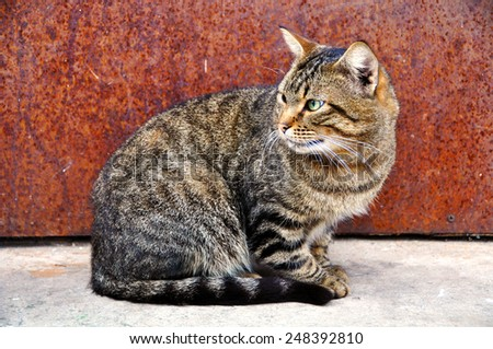 cat sitting next to the door to the house and waiting for his owner - stock photo