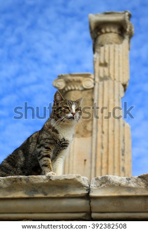 Cat sitting on a pillar in the Ancient City of Ephesus With Roman columns in the background