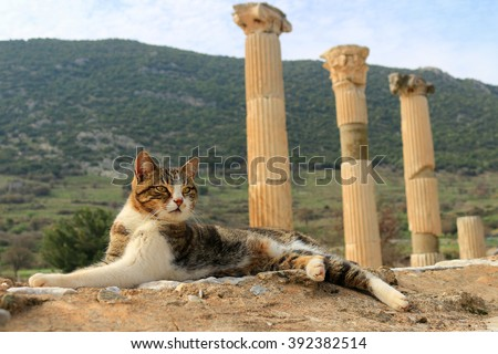 Cat sitting on a pillar in the Ancient City of Ephesus With Roman Columns in the background - stock photo