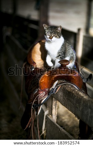 Cat Sitting On A Saddle In The Stable At Sundown - stock photo