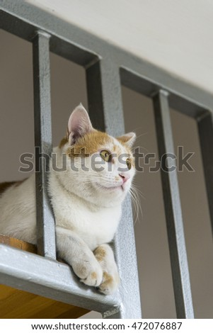 cat sitting on a staircase