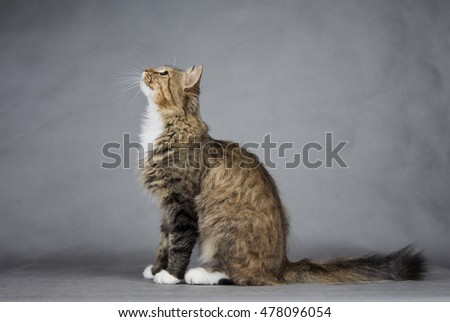 cat sitting on a table on a black background and looking up