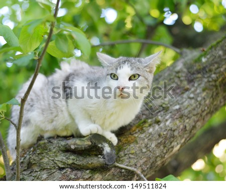 Cat sitting on a tree.