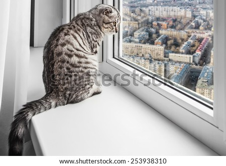 cat sitting on a window sill and looking at the rainy city. Focus on the eyes of a cat - stock photo