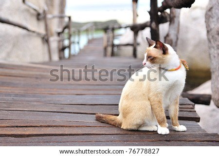 Cat sitting on a wooden bridge look. - stock photo