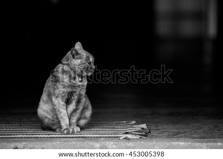 Cat sitting on carpet. Shoot in black and white shot. - stock photo