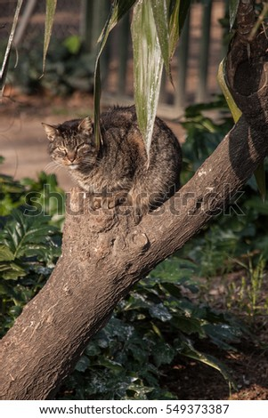 cat sitting on forked branch looking angry