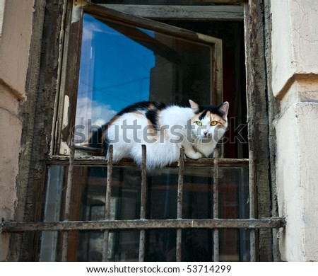 Cat sitting on old window - stock photo