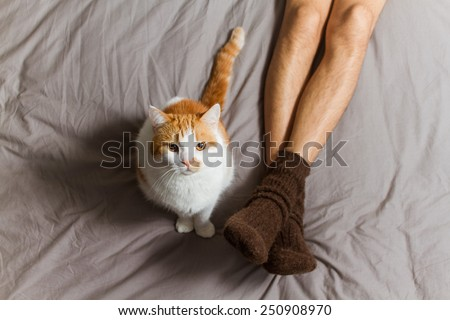 Cat sitting on the bed near male legs in socks and looking up at camera.
