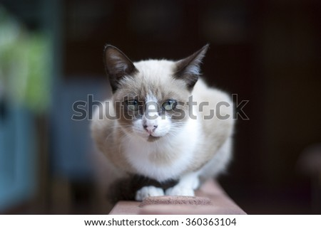 cat sitting on the brick of house and looking  - stock photo