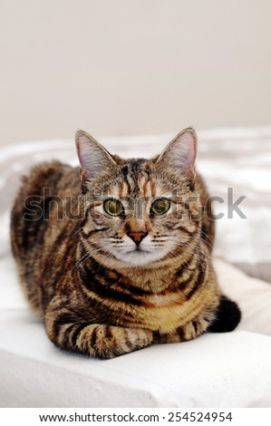 Cat sitting on the chair - stock photo