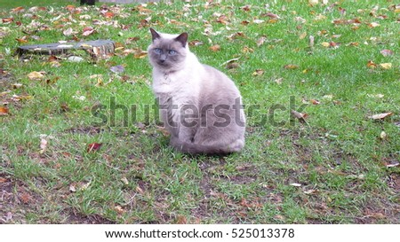 Cat sitting on the ground looking to the side