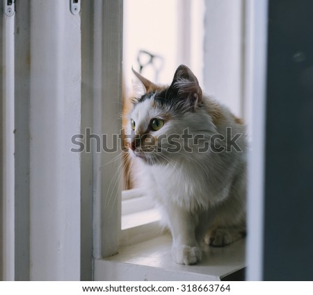 Cat sitting on the home window in sunny day, with vintage filter - stock photo