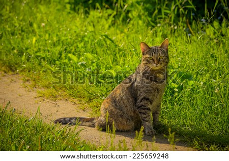 cat sitting on the path - stock photo