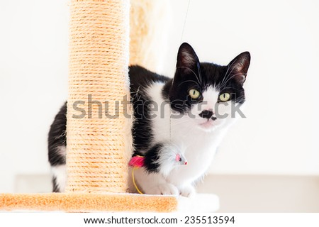 cat sitting on the scratching post with watchful gaze - stock photo