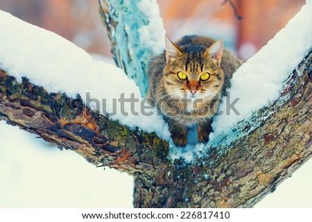 Cat sitting on the snowy tree - stock photo