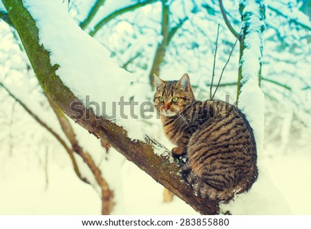 Cat sitting on the snowy tree in the forest - stock photo