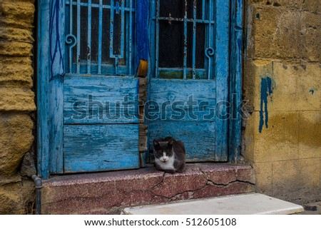 cat sitting on the threshold of the old house - cyprus