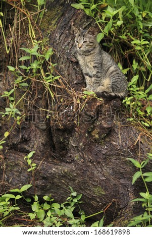 Cat sitting on the trunk  - stock photo