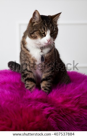 Cat sitting on the white pallet with pink carpet