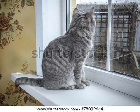cat sitting on the window - stock photo