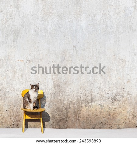 cat sitting on the yellow chair near the wall, winter time - stock photo