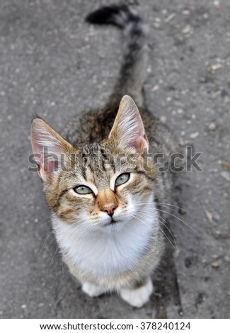 cat sitting under the table and asks to eat - stock photo