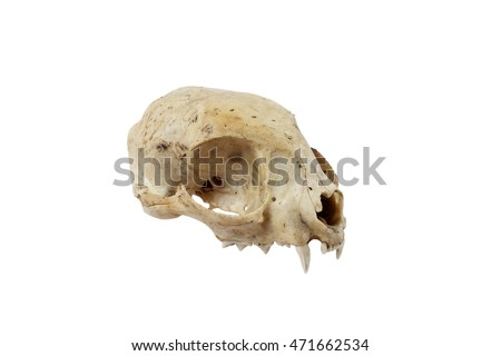 Cat skull side view isolated on white background