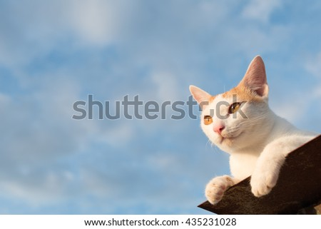 cat sky - cat on the roof - looking - stock photo
