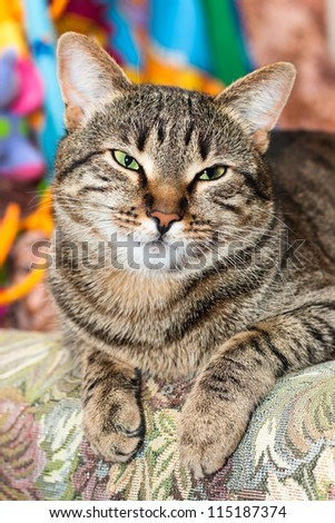 cat sleep on bed - stock photo