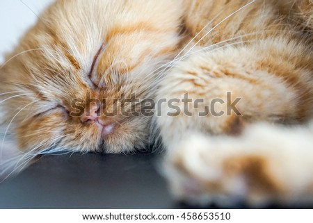cat sleep on the cushion, select focus eye