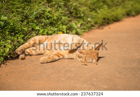 cat sleeping at outdoors