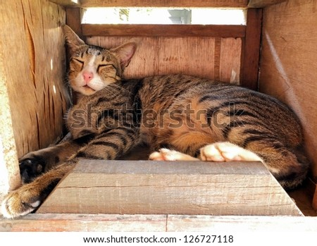 Cat sleeping in a wooden mailbox. - stock photo