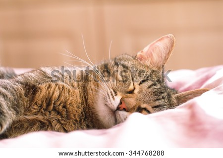 Cat sleeping in bed - stock photo